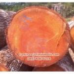 kayu mahoni, kayu mahoni, mahoni, kayu, furniture kayu, ukiran kayu mahoni, furniture, mebel jepara, furniture minimalis